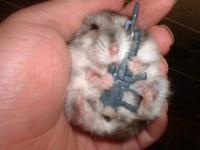 hamster_machine_gun.jpg