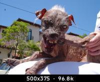 ugliest_dog.jpg